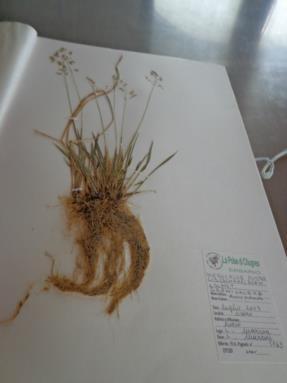 laboratorio botanico2