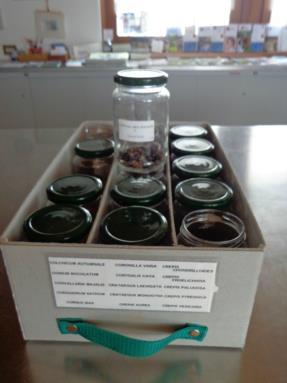 laboratorio botanico3